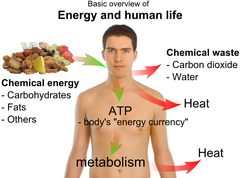 Basic overview of energy and human life.